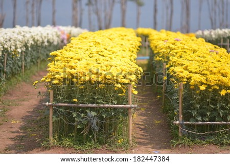 flowers in the field - stock photo