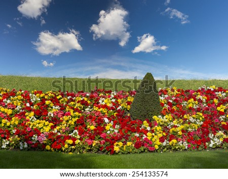 flowers in the garden with blue sky by spring