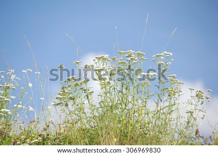 Flowers in the meadow - stock photo
