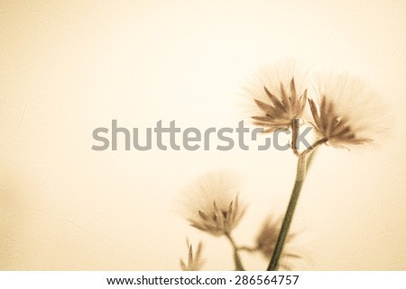 flowers in vintage color style on mulberry paper texture for background