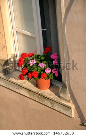 flowers in window - stock photo
