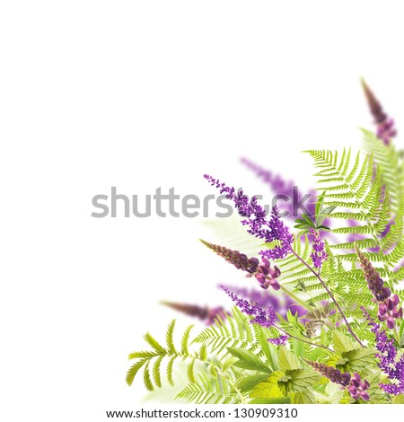 flowers isolated on white - stock photo