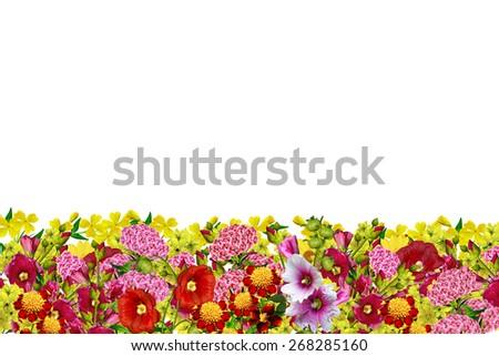 flowers isolated on white background - stock photo