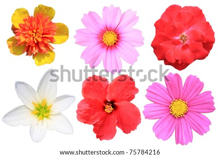 Flowers Isolated stock