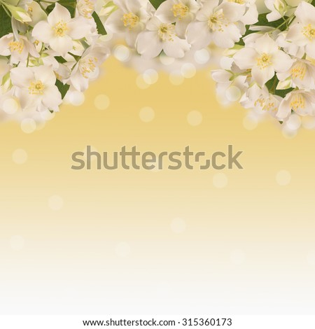 Flowers Jasmine, on a white background,there is a space for text.