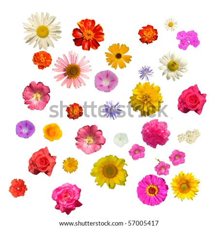Flowers July on a white background - stock photo
