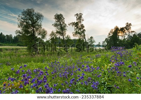 Flowers landscape with tree and sunset - stock photo