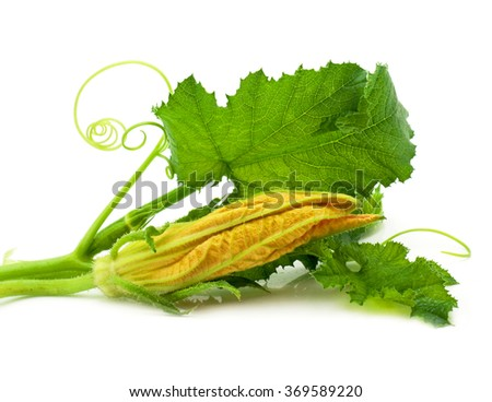 Flowers, leaves  marrow fruits isolated - stock photo