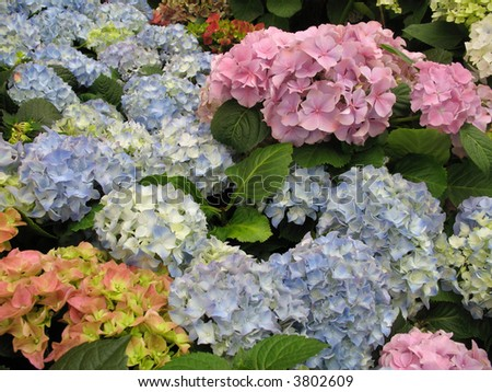 flowers multicolor background - stock photo