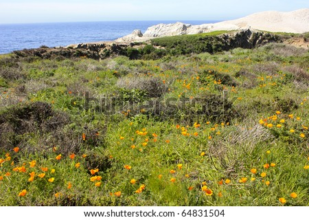 Flowers near China Cove in Point Lobos State Natural Reserve, California.