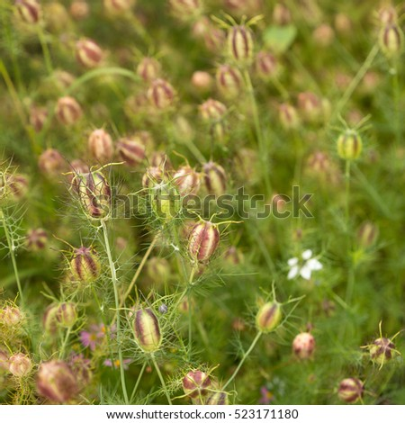Field Dead Flowers Stock Photo 780324100