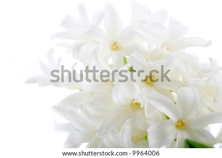 Flowers of a hyacinth on white background