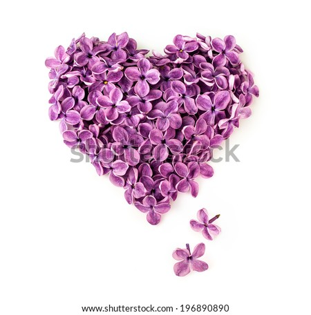 Flowers of a lilac in the form of a heart isolated on a white - stock photo