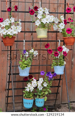 Flowers of a petunia placed before a fence on multistage stand
