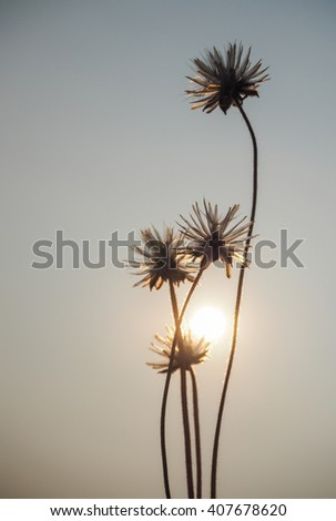 Flowers of grass and sunrise