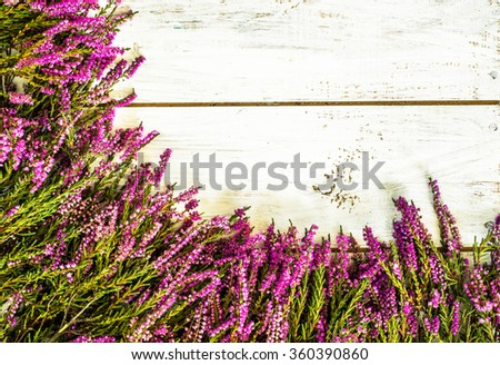 Flowers of heather in purple color on rustic wood background. Flowers backgrounds. - stock photo