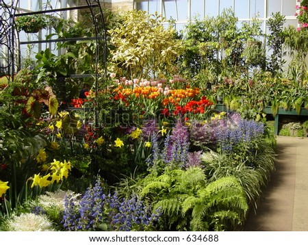 Flowers of New Zealand, Botanical Gardens, Spring, Seasonal - stock photo