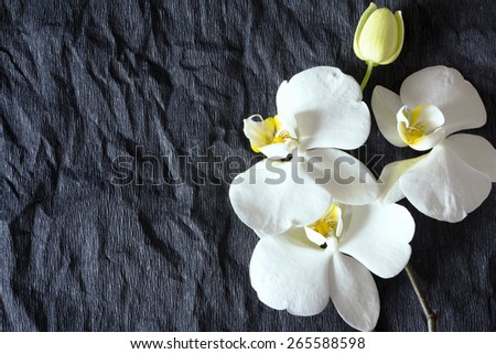 Flowers of white orchid on a black background - stock photo