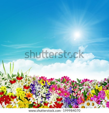 flowers on a background of blue sky with clouds - stock photo