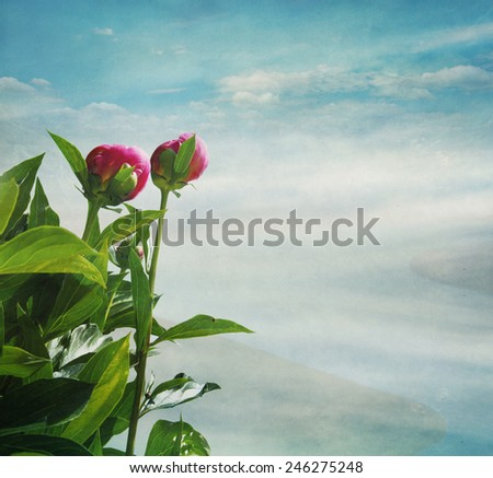 flowers on a background of the sky with clouds,, vintage - stock photo