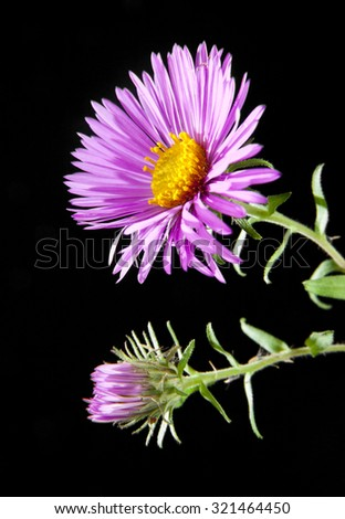 flowers on a black background - stock photo