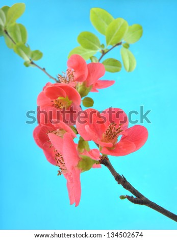 Flowers on a blue background - stock photo