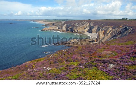 Flowers on a coast along sea in summer