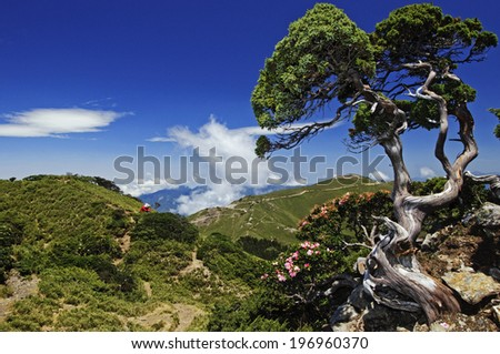 Flowers on a tree at the top of a hill. - stock photo