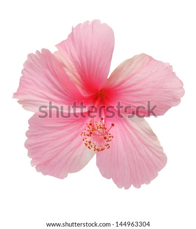 Flowers on a white background. - stock photo