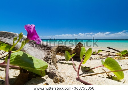 flowers on a white sand beach with crystal clear sea behind in sout pacific - stock photo