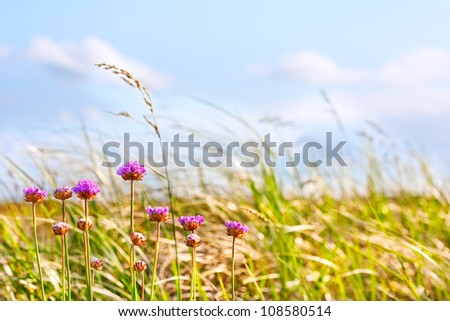 Flowers on a windy summer afternoon by the dune grasses, Long Beach Washington - stock photo