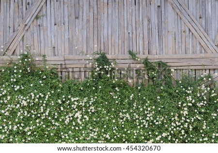 Flowers on bamboo wall background,Little white Daisy on bamboo wall. - stock photo