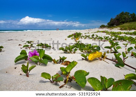 flowers on beach in varadero, cuba