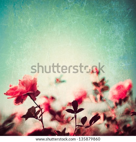 Flowers on blue textured background - stock photo