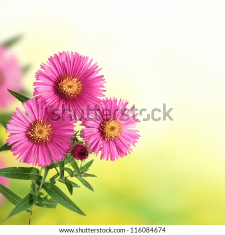 flowers on blurred green background and copyspace for a text - stock photo