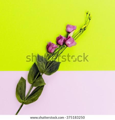 Flowers on bright background. Minimalist fashion style - stock photo