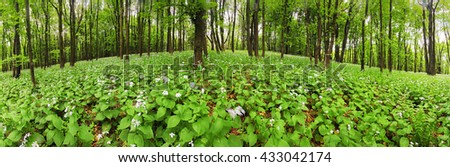 Flowers on green forest - 360 panorama - stock photo