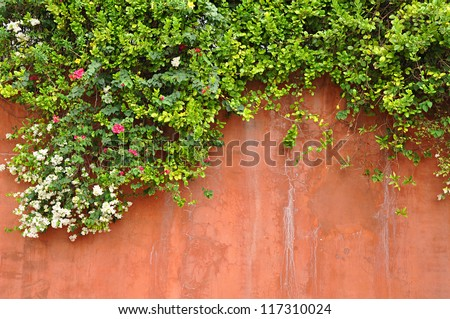 Flowers on retro concrete wall - stock photo