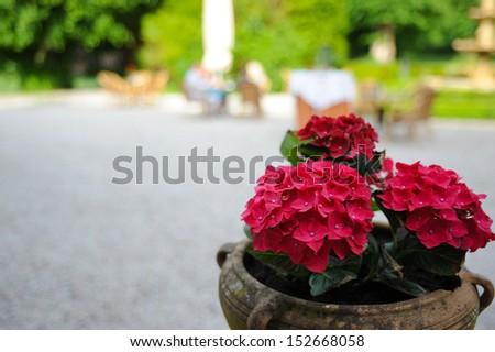 Flowers on terrace - stock photo