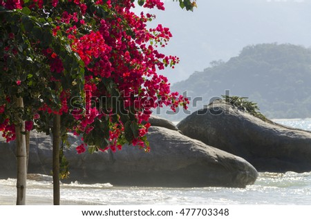 flowers on the beach on the island of bald in Paraty Brazil