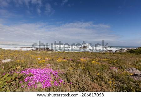 Flowers on the dunes - stock photo