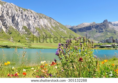 flowers on the edge of a mountain lake in summer in ski resort  - stock photo