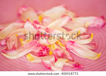 Flowers on the pink background