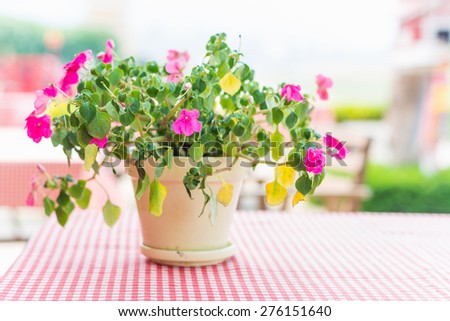 flowers on the table outdoors