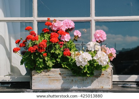 Flowers on the window sill of a country house in Stockholm (Sweden)