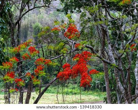 Flowers on trees - stock photo