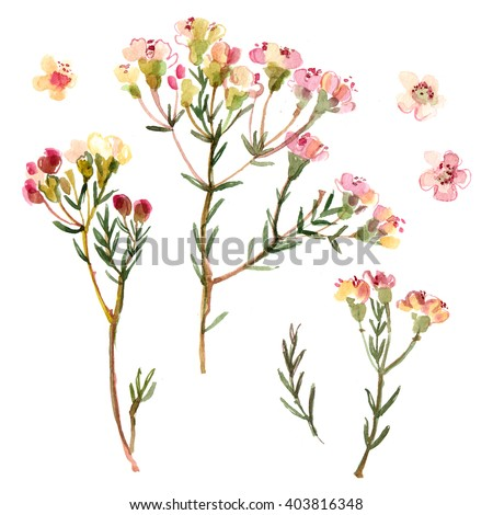 Flowers painted with watercolors on white background. Small flowers, wedding decor. Watercolor flowers. - stock photo