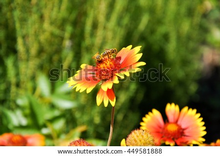 flowers plants nature macro insects animals variegated - stock photo