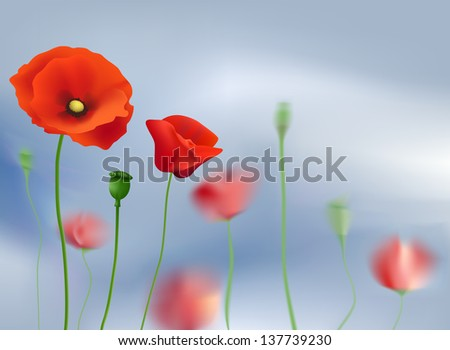 Flowers poppies on a background of sky - stock photo