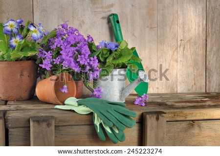 flowers pot and gardening accessories on wooden background  - stock photo